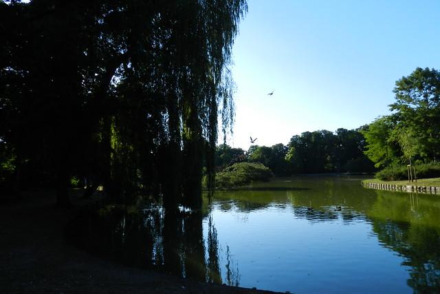 estanque Jardines parque del Castillo Palacio de Biebrich Wiesbaden Alemania 01
