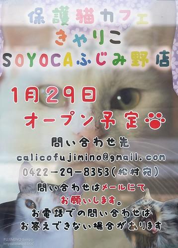 保護猫カフェきゃりこ ふじみ野 20200124-DSCT8711 (2)