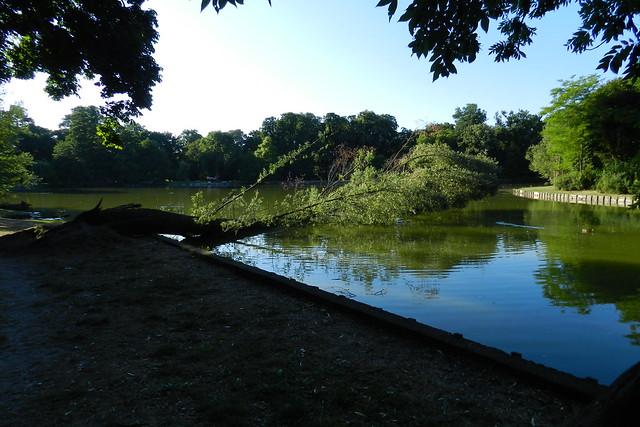 estanque Jardines parque del Castillo Palacio de Biebrich Wiesbaden Alemania 02