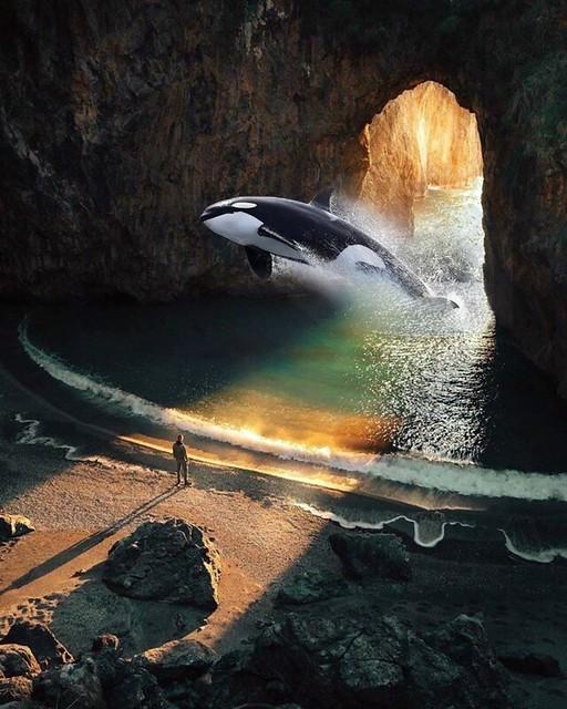 Orque grotte