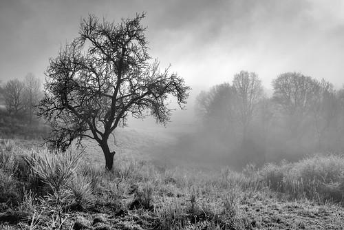 *winter landscape in b+w*
