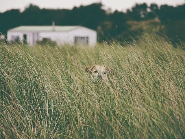 Such den Hund | 8. September 2013 | Fehmarn - Schleswig-Holstein - Deutschland