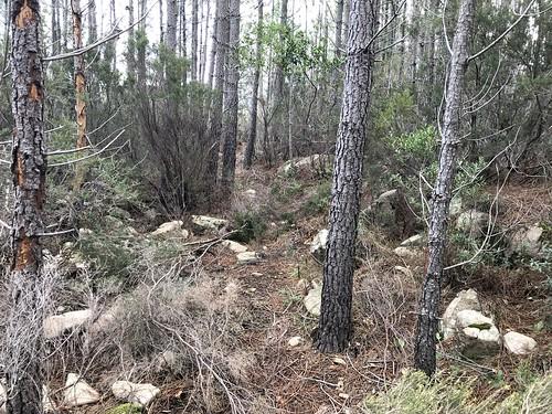 Restauration de l'ancien chemin de Luviu vers 500m : la trace avant le démaquisage/nettoyage