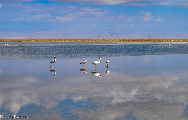 The mirror of Atacama / Зеркало Атакамы