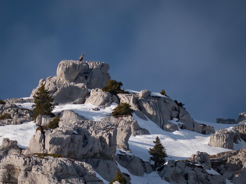 Le roi des falaises... 49450664886_e453d8b9a8_b