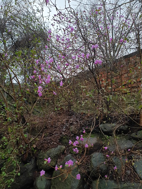 Tartu University Botanic Gardens