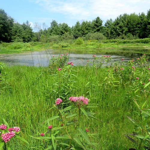 World_Wetlands_Day_Photo_NR_1