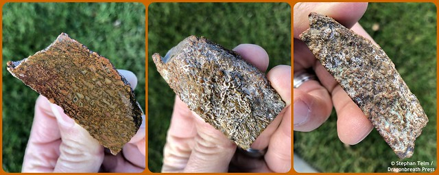 Dino bone_1 chunk 3 views