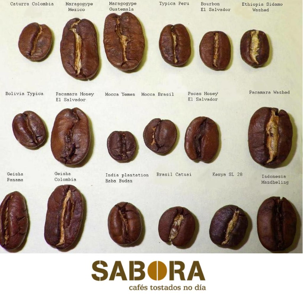 Distintos tipos de grans de café arábica