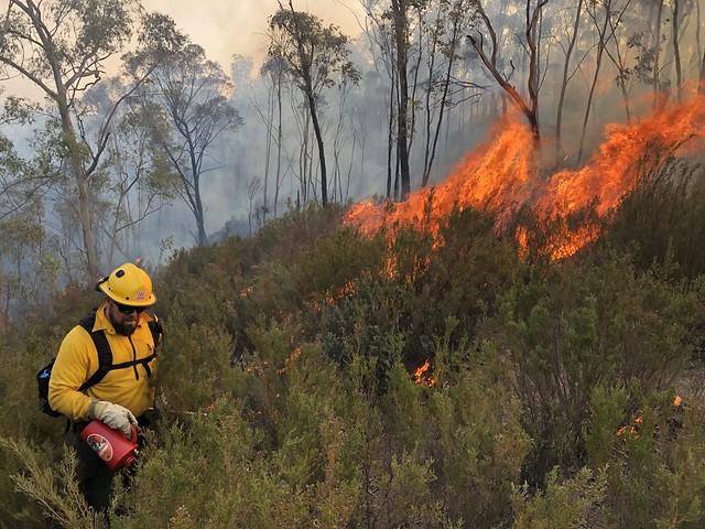 Ook de 'klimaatcurve' vraagt daadkracht. Bosbranden in Australië; beeld ter illustratie.