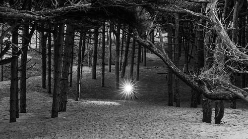 Wicks Wood