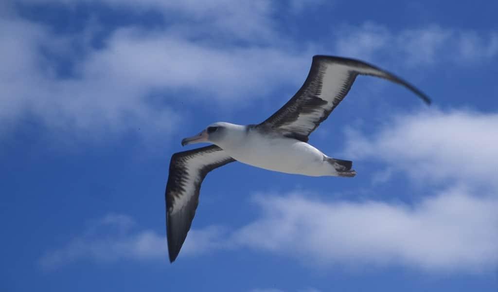 surveiller-les-bâteaux-de-pêche-illégaux-avec-des-albatros