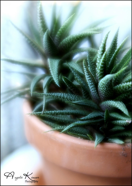 Harold, the Succulent...