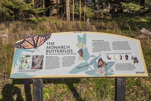 Sign Explaining Monarch Butterfly Migration along California Coast