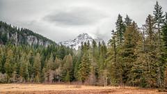 Longmire Meadows