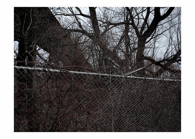Fence, trees, ore dock trestle