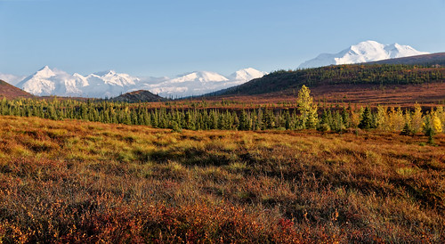 Letting Nature Pamper Me with Snapshots of a Denali National Park