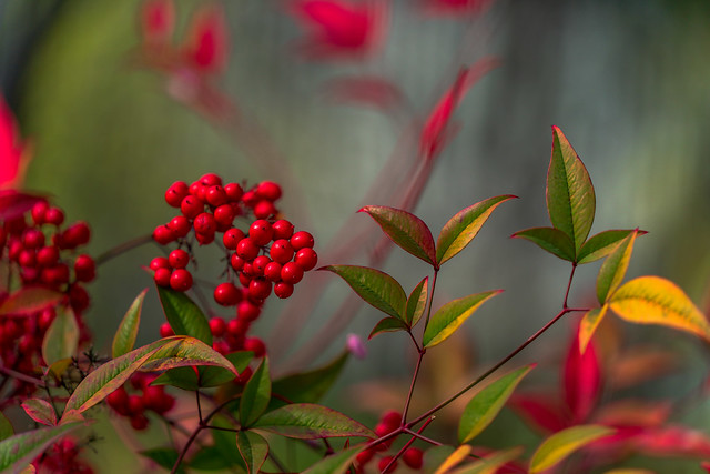 Spring Berries seen in Explore #345