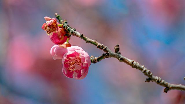 Vasona Spring-