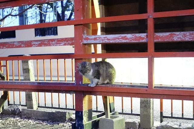 Today's Cat@2020-01-27