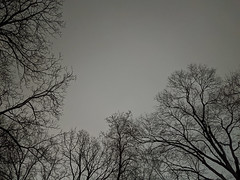 Sky (27 Jan 2020)
