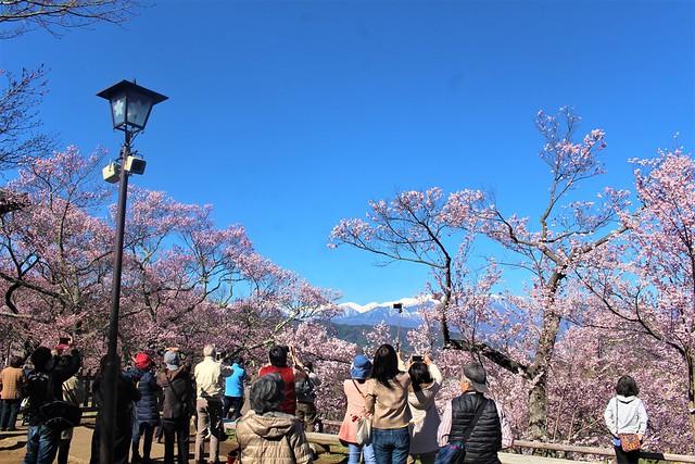 takatojosakura-honmaru003