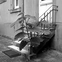 le vieil escalier de la maison voisine