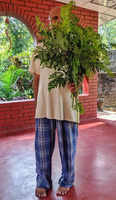 Moringa (Drumstick Tree) Leaves