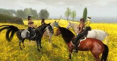 We rode through a field of buttercups