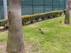 Triple Squirrel