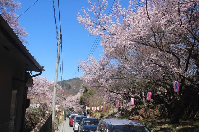 takatojosakura-sannomaru005