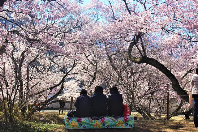 takatojosakura-minami003