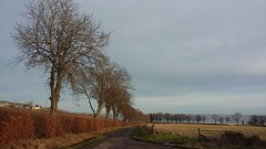 Trees, Avoch, Black Isle, Jan 2020
