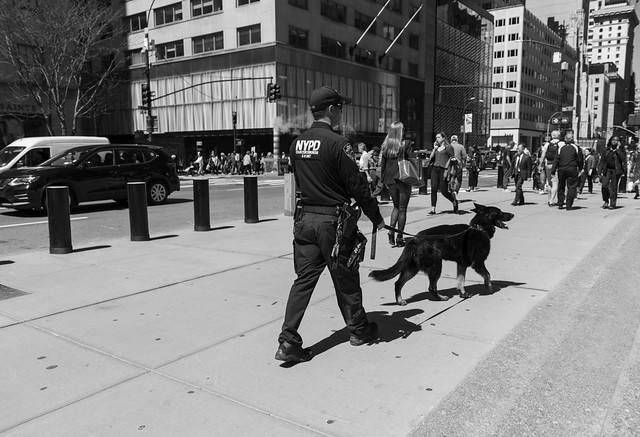 police with your dog (New York people)