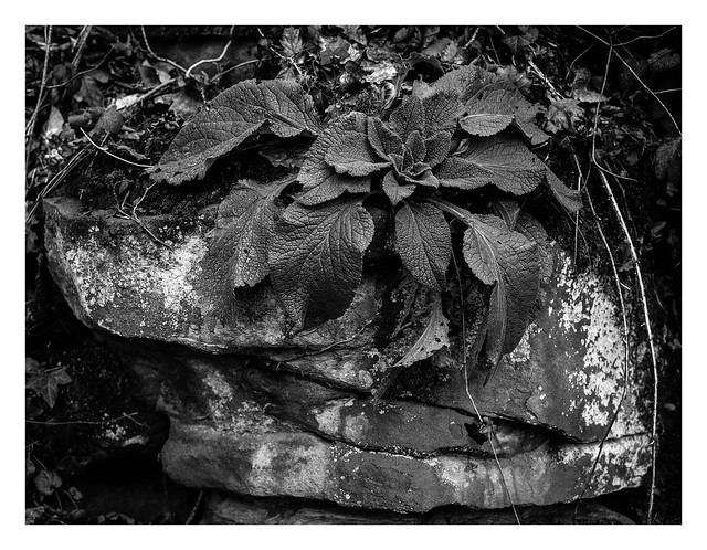FILM - Vegetable. Mineral