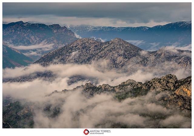 Les boires s'aferren a terra a la montanya d'Alinya.
