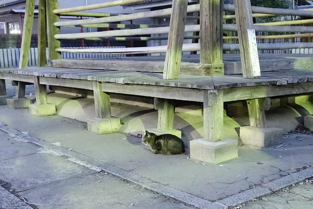 Today's Cat@2020-01-28