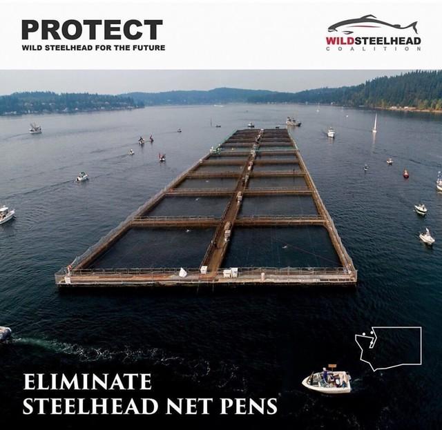 steelhead-nets