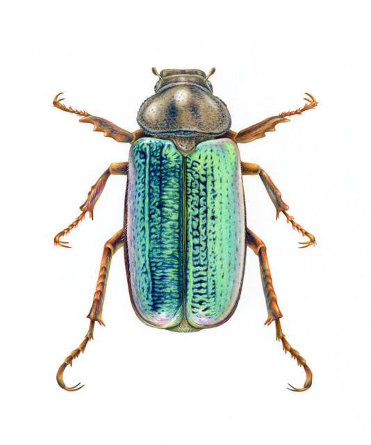 Junebug Illustration
