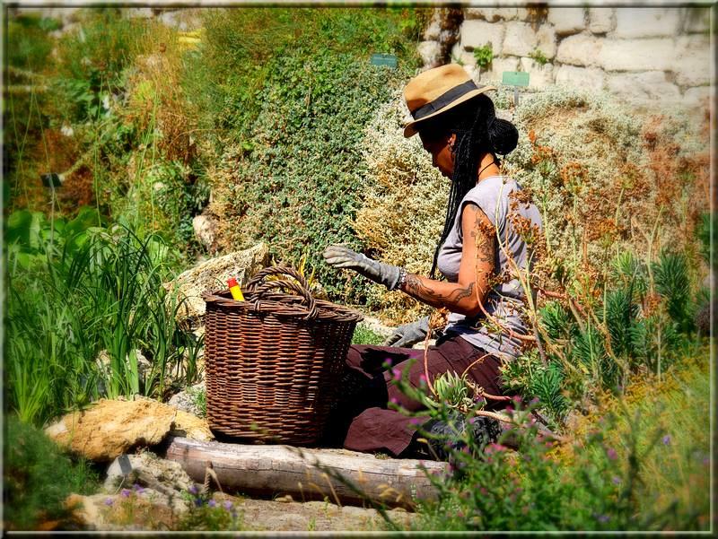Jardinière tatouée 49456660838_64ca6f45f5_c