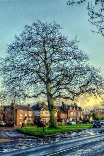 Hallow Village green and Turkey oak tree
