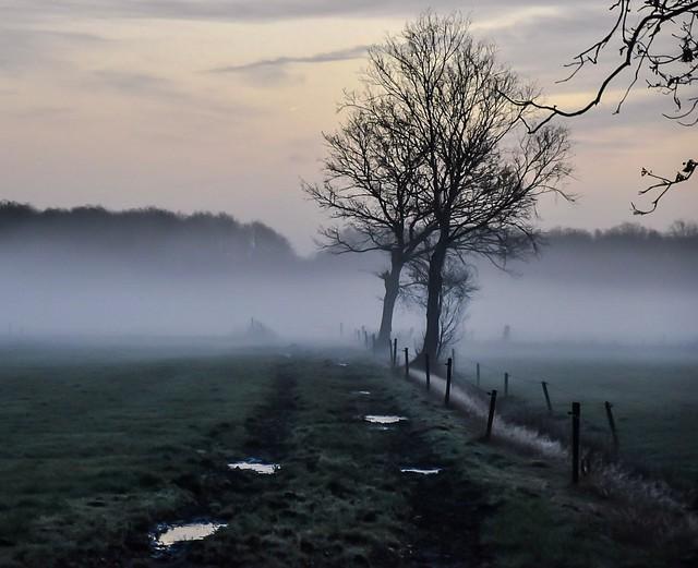 misty winter