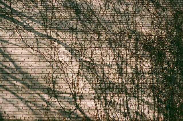 shadows bricks vines