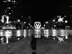 #IFFR #IFFR2020 #blackandwhite #puddle #puddleography