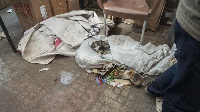 Cats at Egypt's Al-Azbakeya market