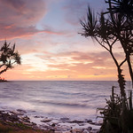 Nightcliff Pandanus Panorama