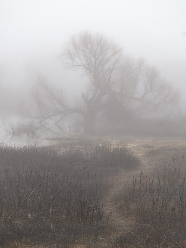 fog dallas texas landscape flowermound murrellpark winter 2020 nikonz6
