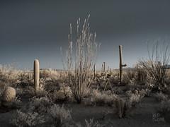 Desert Species