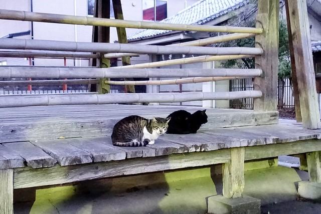 Today's Cat@2020-01-29