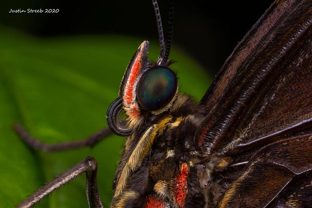 Brookside Butterfly 2019-16